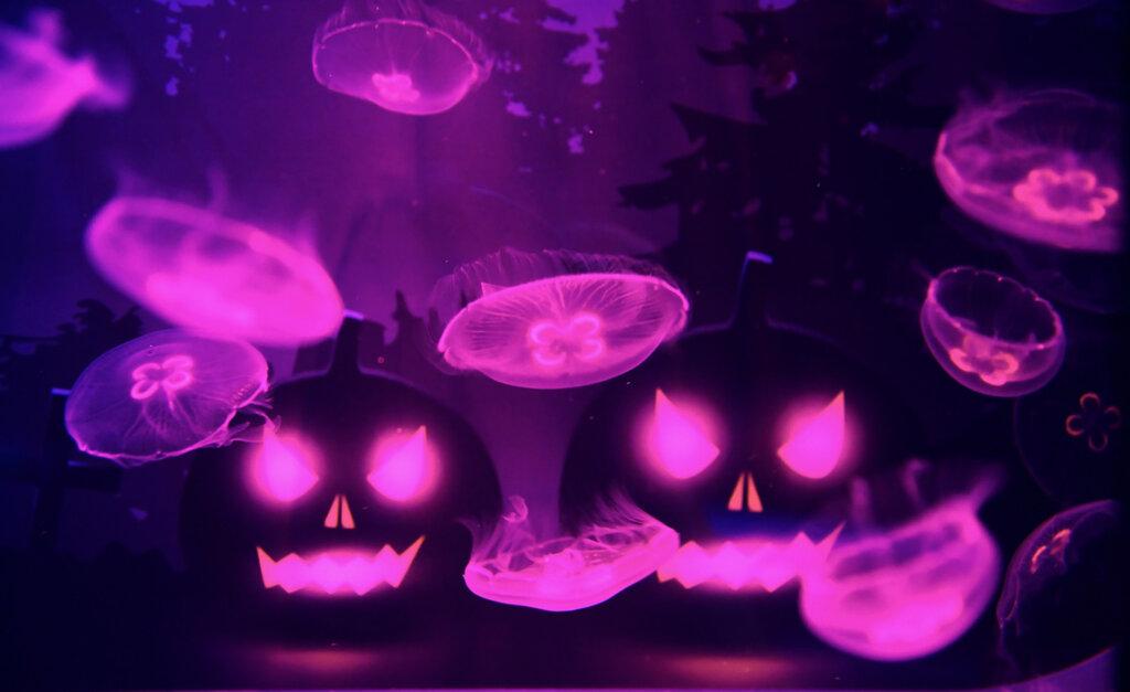ハロウィンinすみだ水族館