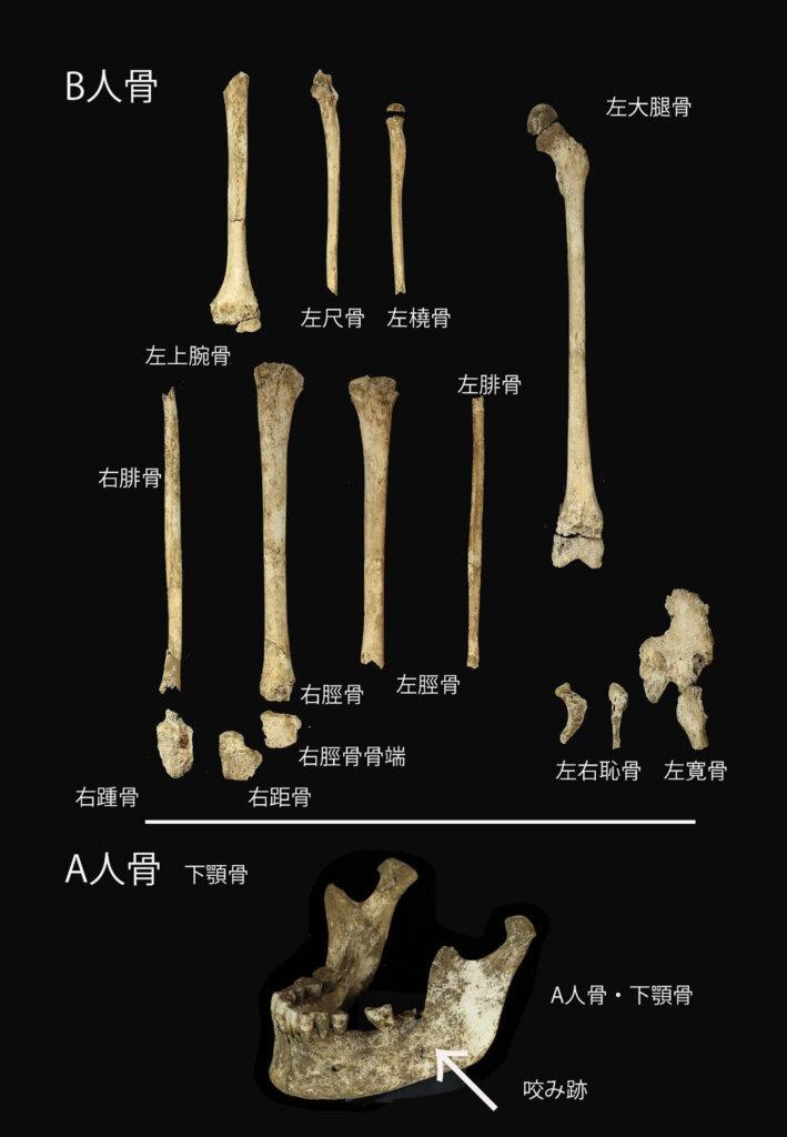 縄文人全身骨格のパネル展