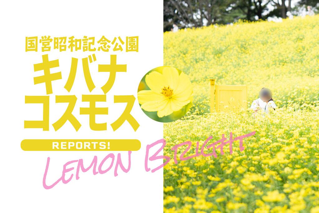 昭和記念公園 コスモス レモンブライト